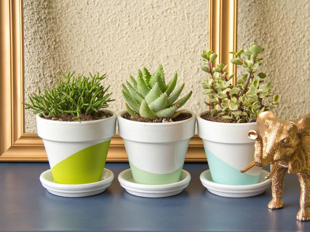 Low-Maintenance Plants for Apartment Dwellers
